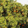 Caldera de vapor ATTSU a 96,3% de rendimiento para hacer el mejor zumo de naranja